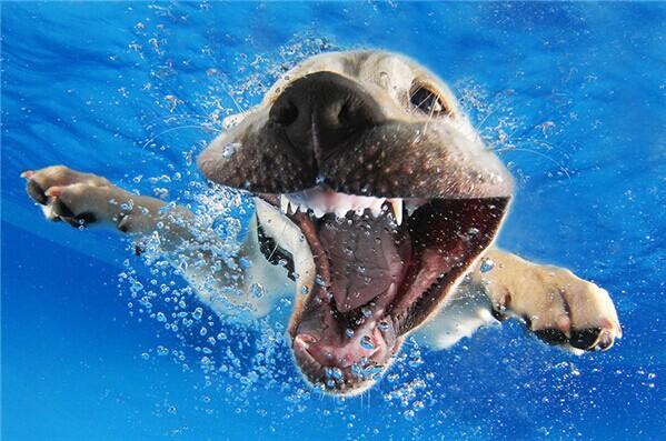 泡在水里的动物